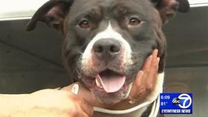 Pit bull rescued after stranded on rock ledge in New Jersey