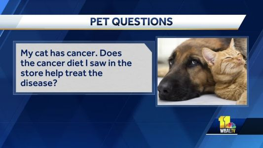 Pet Questions: Does cancer diet help treat the disease?