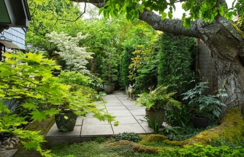As he does for his Ballard shop, Curtis Steiner curates the uncommon for his own garden