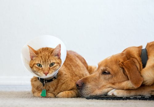 The best pet insurance companies for your beloved cats, dogs, and more