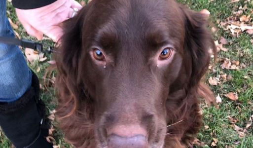 Drug needle gets stuck in dog's paw