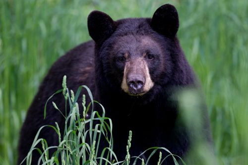 Woman seriously injured after finding bear in her kitchen