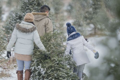 Christmas tree farmers combat popularity of artificial trees with new ad campaign