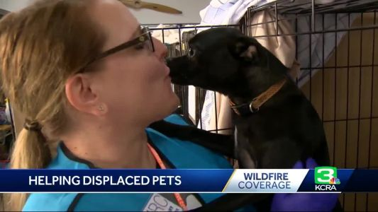 Online catalog created to reunite Camp Fire evacuees with pets