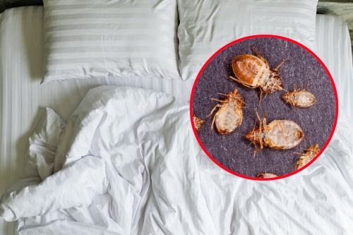 Here's why you should always check your hotel room for bedbugs, and how to do it