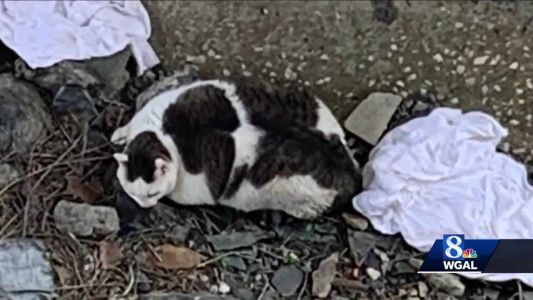 Cat lives after being thrown off embankment in York County