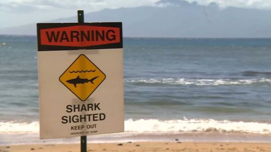 Shark attack kills man swimming off Maui, Hawaiian authorities say