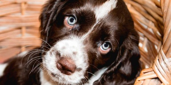 This is what happens in your body when you simply can't deal with how cute a puppy is