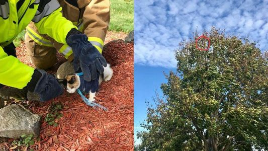 Cat found hanging from tree rescued by 'cat whisperer'
