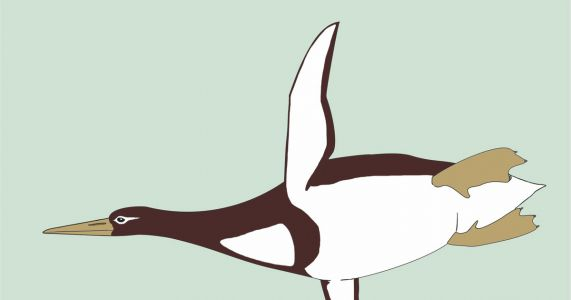 Ancient penguin was as big as a Pittsburgh Penguin