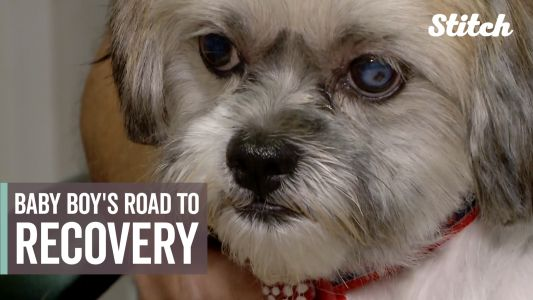 Severely burned and left for dead, dog makes remarkable recovery