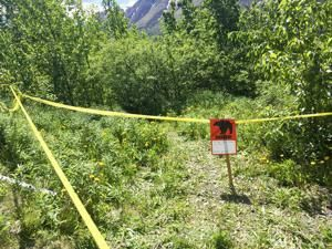 Bear kills hiker, mauls search party member