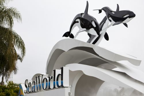 SeaWorld, ex-CEO settle with SEC over 'Blackfish'