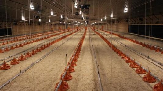 Costco Builds Nebraska Supply Chain For Its $5 Rotisserie Chickens