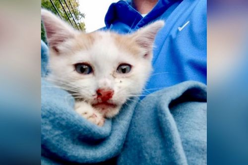 Cops hunt for monster who threw kittens from moving SUV