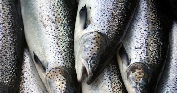 US imported more seafood in 2017 than any prior year