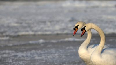 New outbreaks of bird flu in Lithuania, Czech Republic and Rep. of Ireland