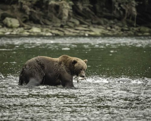 National Parks Service has some suggestions if you're attacked by a bear: 'Don't push your slower friends down'