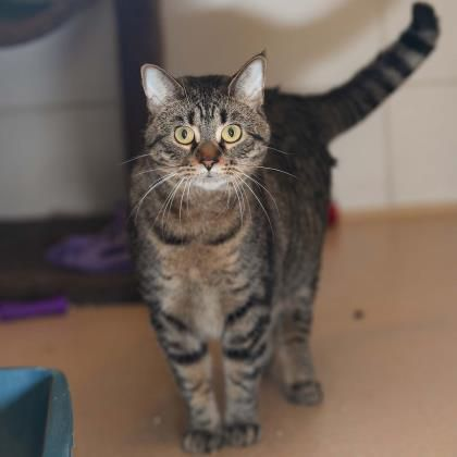 See who's new at the Wisconsin Humane Society
