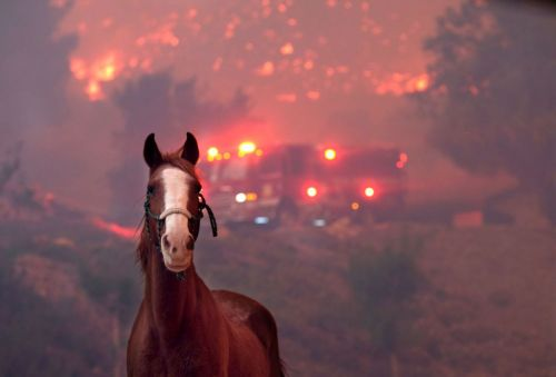 Heartbreaking photos of animals affected by California fires