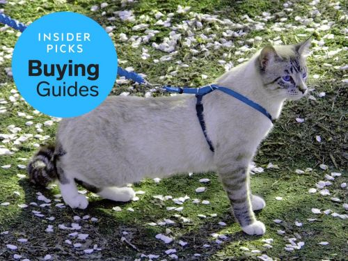 The best cat harnesses and leash