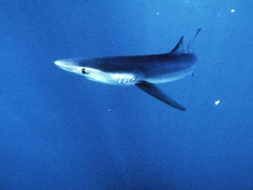 American citizen attacked by shark in the Bahamas