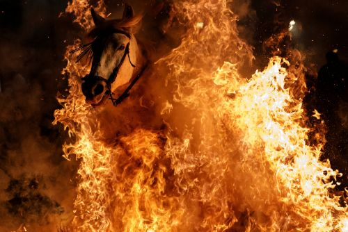 Horses are purified by fire in Spain