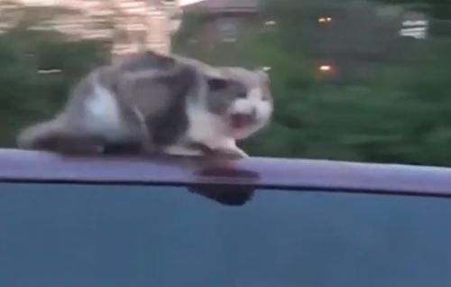 ​Cat clings to car as it travels around 60 mph on busy highway