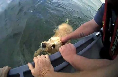 News We Love: Police officers save dog from Oklahoma lake