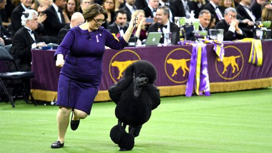 Westminster Dog Show prize money: How much do the winners make in 2021?