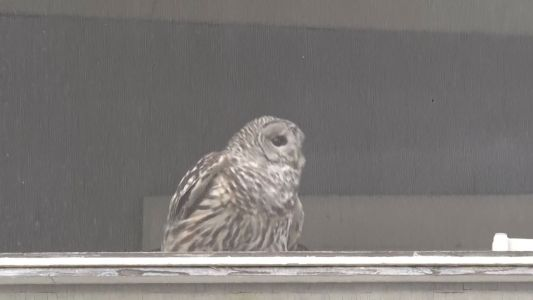 Owl rescued after becoming trapped