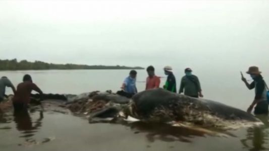 Dead whale had 115 plastic cups, 2 flip-flops in stomach