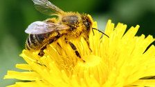 Trump Administration Lifts Ban On GMOs, Bee-Killing Chemicals In Wildlife Refuges