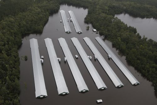 Hurricane Florence has killed nearly 2M chickens