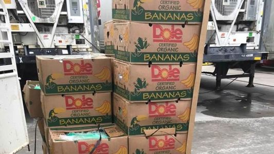 Prison guards find $17.8 million worth of cocaine in shipment of donated bananas