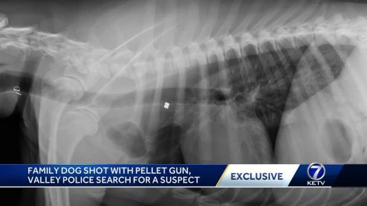 Family dog shot with pellet gun, Valley police searching for a suspect